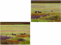 GOATS IN GRASSES 24 & 25