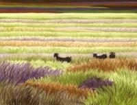 goatgrass24b