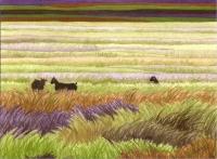 goatgrass25b